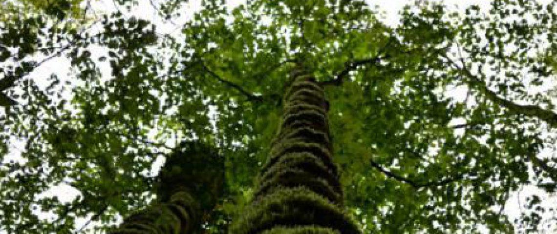 Da stieg ein Baum